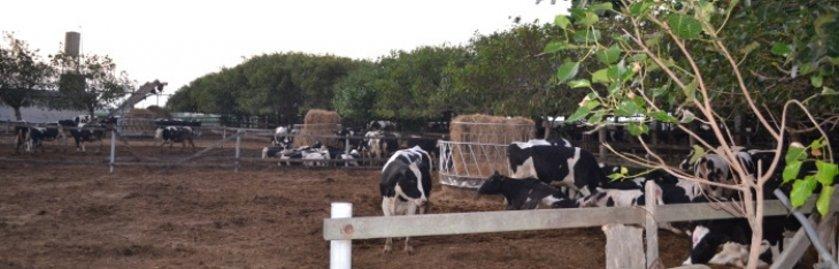 建豪畜牧場2