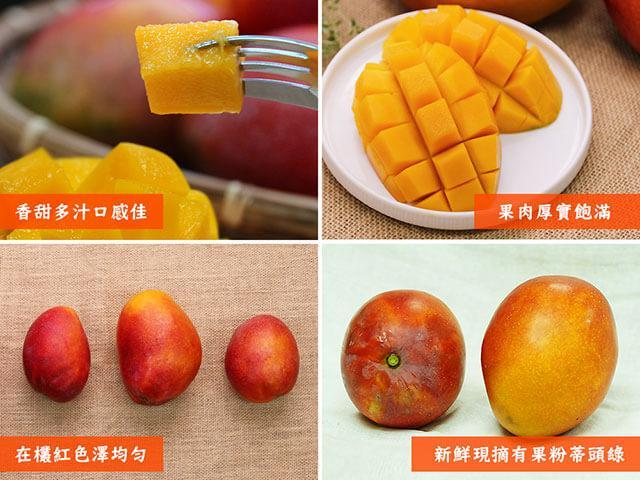 在欉紅芒果
